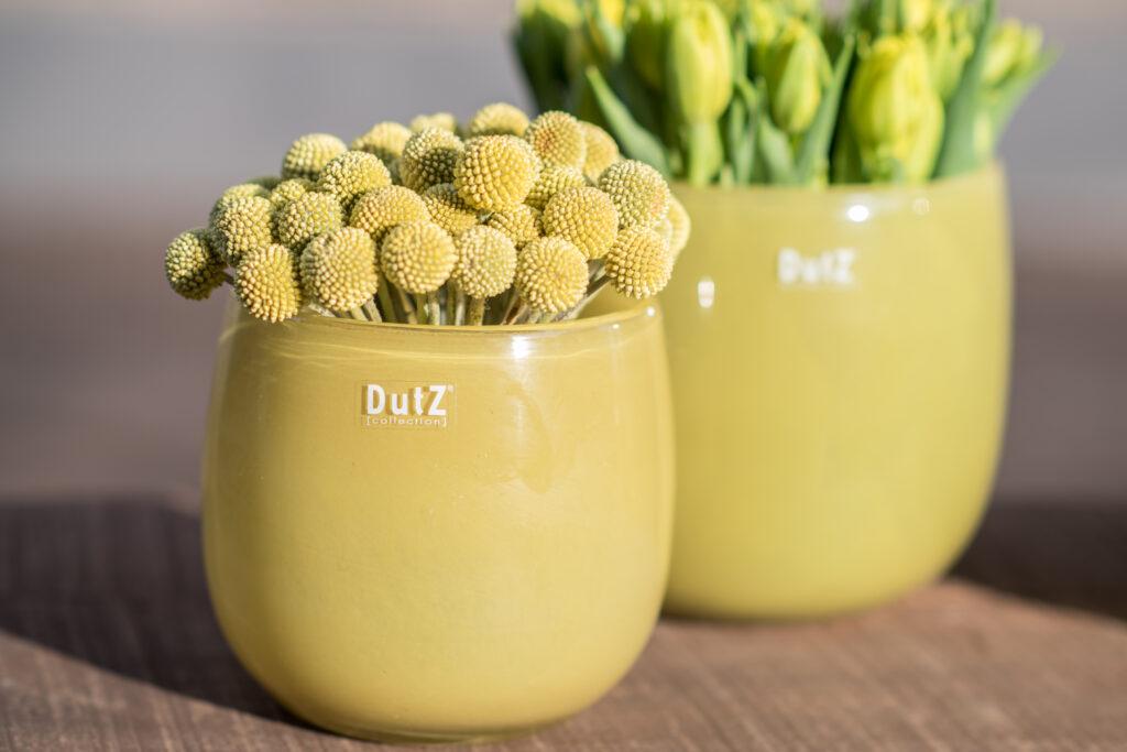 DutZ_pot_mustard