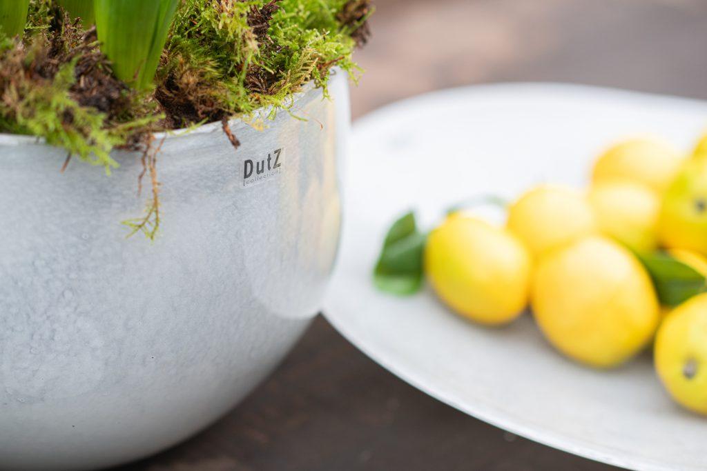 Bowl met hyacinthen en plate met bubbles gepresenteerd met citroenen